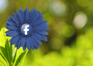 fiore facebook