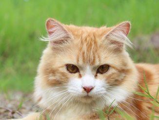 cat-111793_960_720