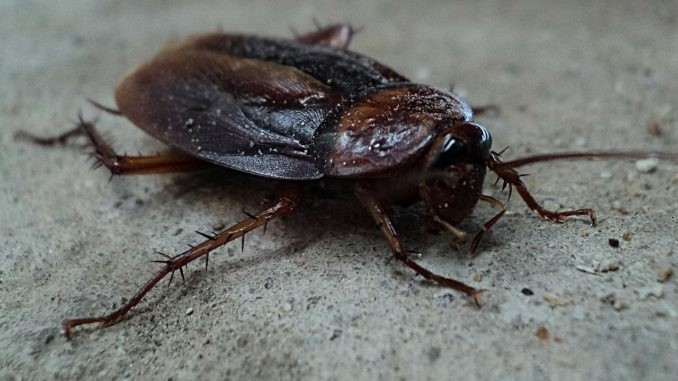 6 cockroach-70295_1280 (1)